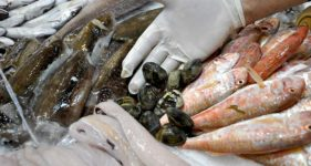 Pesce fresco locale